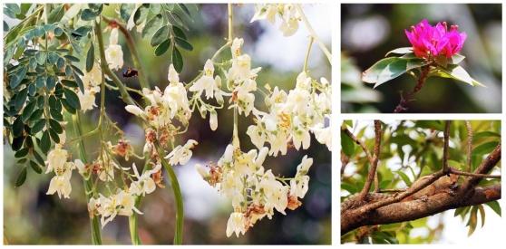ecureuil bumble bee fleur CREST Bangalore