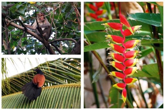 fleur oiseau singe CREST Bangalore