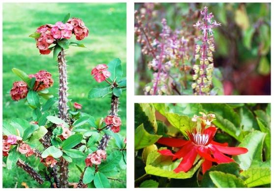 fleurs CREST Bangalore