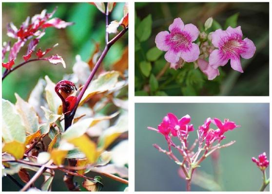 fleurs et bourgeon CREST Bangalore
