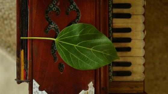 harmonium leaf